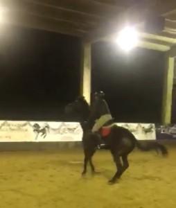 sensibel paard